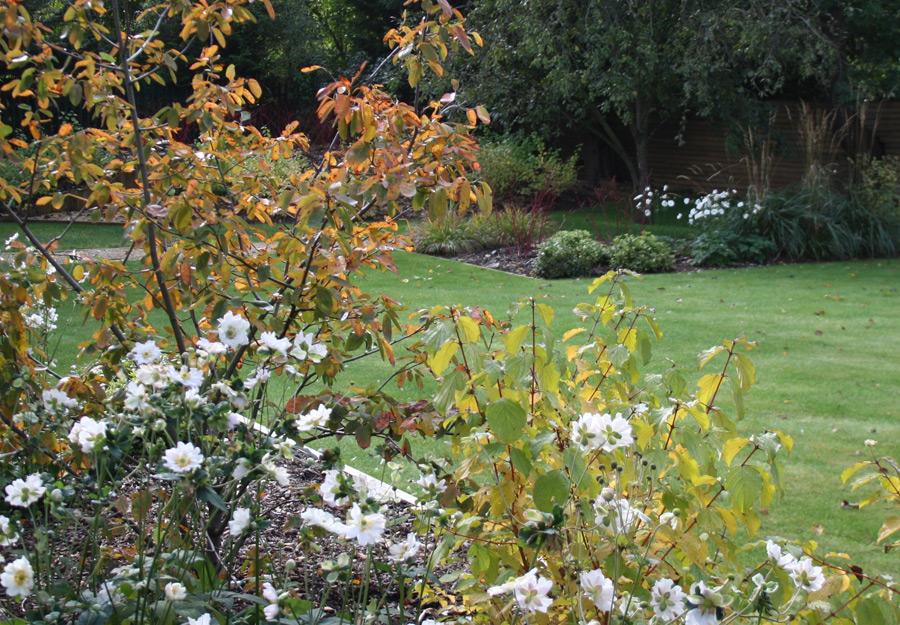 Liz Harrison Bold Geometric Garden